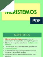 Tejidos meristematicos 1