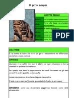gatto_verifica