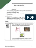 TP1-2013.pdf