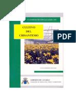 crisantemo-canarias