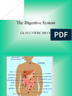 35 1 Digestion