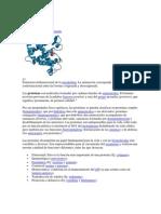 Proteína y carbohidratos.docx