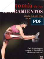 Anatomía Estiramientos