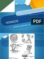 Gerardo Hongos