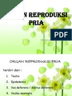 Anatomi Organ Reproduksi Pria