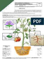 Guia #3 Partes de La Planta