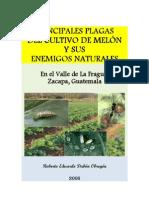 principalesplagasdelcultivodemelonysusenemigosnaturales-100531164308-phpapp01