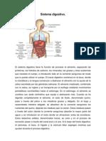 Anatomia Sistema Digestivo 2