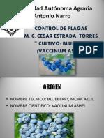 Control de Plagas 1