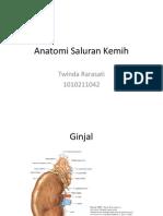 Anatomi Saluran Kemih