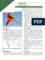 001_Brasicales_Tropaeolaceae.pdf