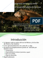 Patrones de desplazamiento de la iguana verde (Iguana iguana) en el Estuario de la Bahia de San Juan