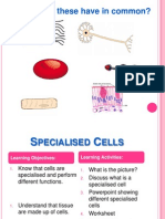 powerpoint of spcialisedcells