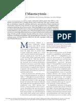 Evaluation of Macrocytosis