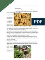 Banana Trade Facing Unfruitful Change