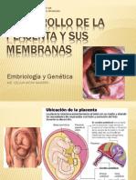 7.USMP Placenta 2013