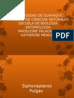 Siphonapteros-pulga.pptx