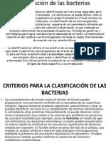 clasificacindelasbacterias-130207083007-phpapp02