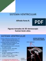 Sistema Ventricular Snc (Sintergetica)
