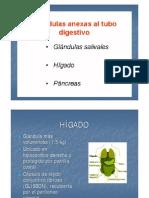 Clase 7 Higado 2011
