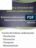 funcinyestructuradelsistemacardiovascular-120512080638-phpapp01