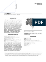 pluruba.pdf