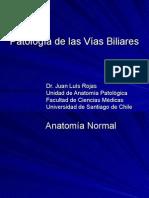 07-Patología Digestiva-Vía biliar