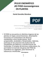 COMPLEJO ENZIMÁTICO CITOCROMO P450 monooxigenasa EN PLANTAS