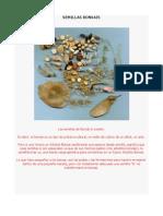 Manual de Semillas Bonsais