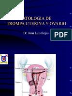 38-Trompa y Ovario