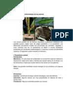 Causas de Las Plagas y de Las Enfermedades de Las Planta1