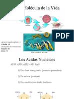 biologia_molecular_Bio_IQ.ppt