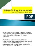 Mikrobiologi Endo