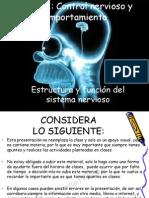 Estructura del sistema nervioso 2013.pdf