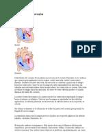Fisiología del corazón
