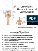 Chapter 6 Hormone Nervous System Student