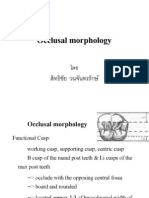 Occlusal Morphology