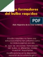 1.- Nucleos Formadores Del Bulbo Raquideo (Abdi)