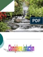 Clomiphene Induction