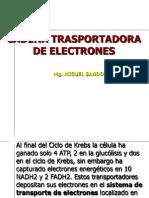 Cap 2.3. Cadena Transporte Electrones