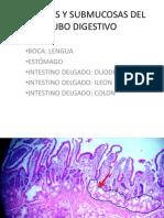 Tubo Digest Ivo
