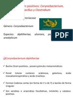 Bacilos Gram Positivos, Corynebac,Bacillus,Clostrid
