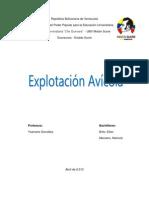 Informe Avicola