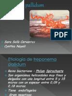 Bacteria Treponema