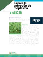 Cassava SP