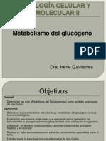Metabolismo del glucógeno 3