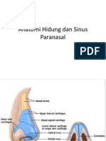 Anatomi Hidung Dan Sinus Paranasal