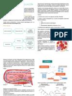 Fisiología de la coagulación. Resumen