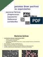 Lacto Bacillus