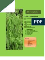 E-BOOK 2 PTEREDOPHYTA